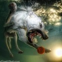 thumbs underwater photos of dogs seth casteel 4