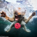 thumbs underwater photos of dogs seth casteel 5