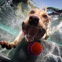 thumbs underwater photos of dogs seth casteel 6