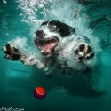 thumbs underwater photos of dogs seth casteel 7