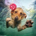 thumbs underwater photos of dogs seth casteel 8