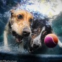 thumbs underwater photos of dogs seth casteel 9