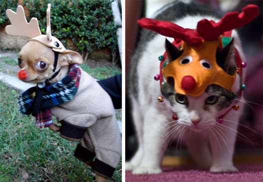 Pets In Christmas Costumes A Very Unhappy Photo Gallery